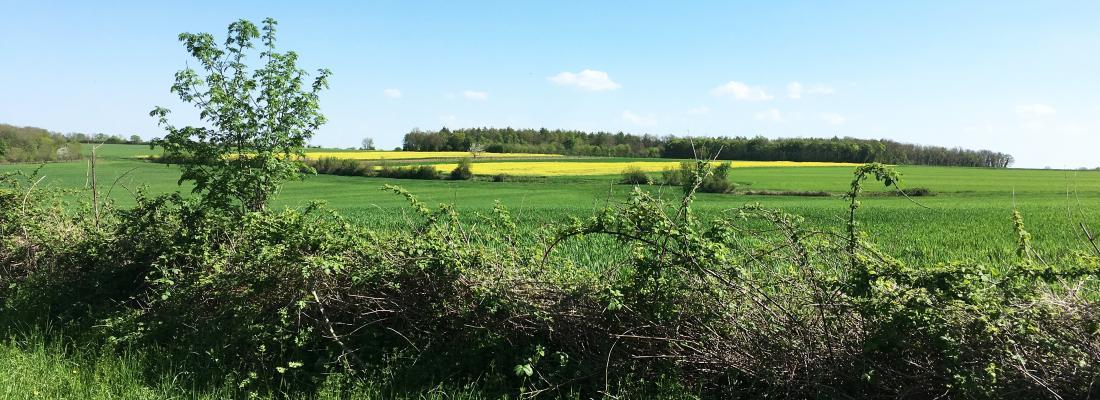 illustration Plus de prairies dans les paysages agricoles favorise la régulation biologique naturelle des ravageurs de cultures