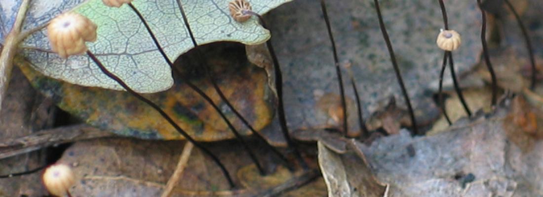 illustration Voyage au royaume champignons