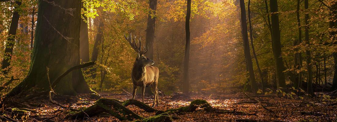 illustration Préserver la biodiversité, une nécessité