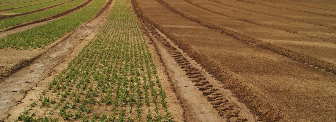 illustration EJP SOIL : lancement du programme européen sur les sols agricoles