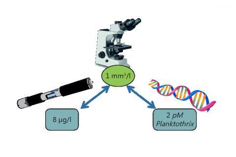 Illustration 2: seuil de biomasse de cyanobactéries déterminée au microscope et valeurs  correspondantes mesurées par la sonde AlgaeTorch et le biocapteur Planktothrix - Crédit réalisation P. Camoin