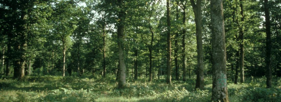 illustration INRAE, aux côtés des acteurs de la filière forêt bois, s'engage auprès de l'Etat pour l'adaptation des forêts au changement climatique