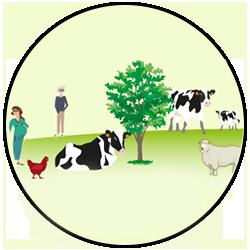 Faut-il consommer de la viande : Privilégier les élevages à l'herbe et l'utilisation des coproduits de culture