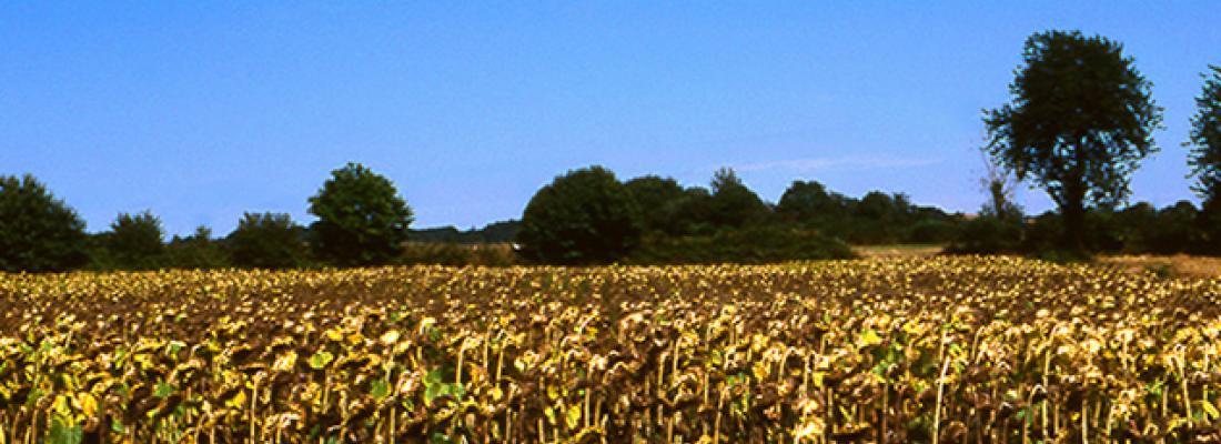 illustration  Sécheresse et agriculture : Réduire la vulnérabilité de l'agriculture à un risque accru de manque d'eau