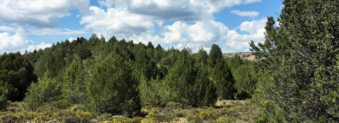illustration Spontaneous forest establishment in Europe: an opportunity for landscape conservation and management