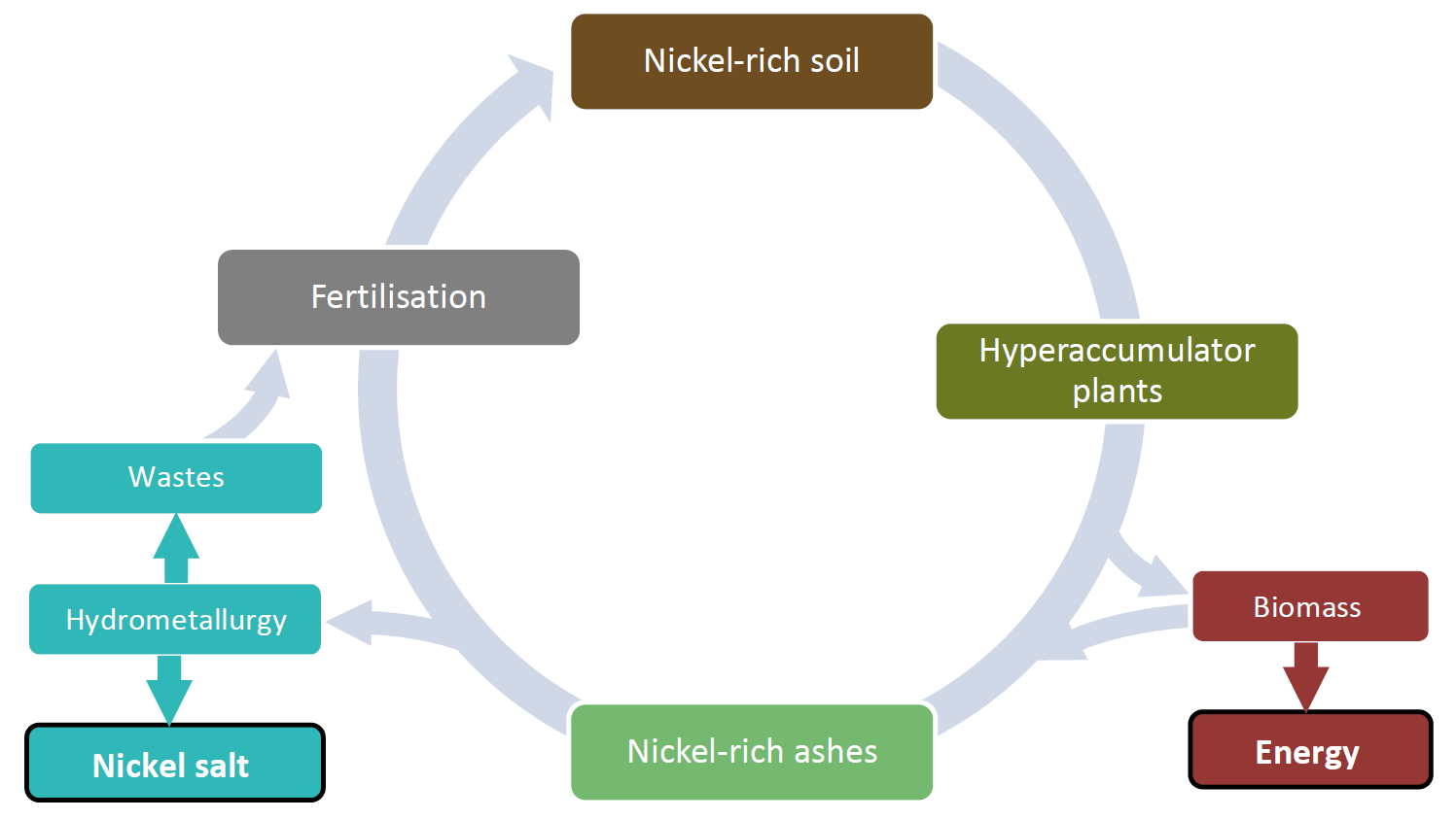 Nickel agromining cycle. Source: https://life-agromine.com/agromine/