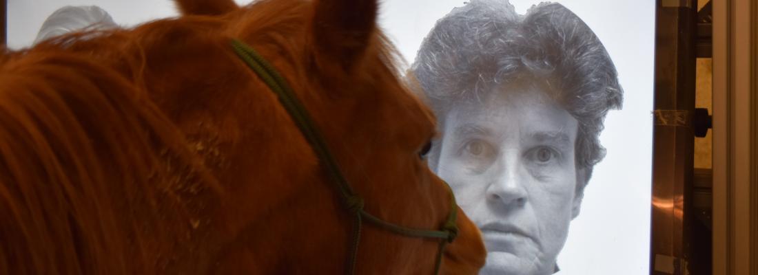 illustration Les chevaux experts en reconnaissance faciale
