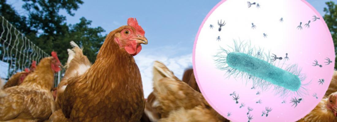 illustration Des virus bactériens, auxiliaires de santé animale