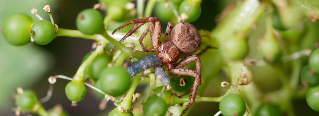 illustration Organic farming favours pest regulation