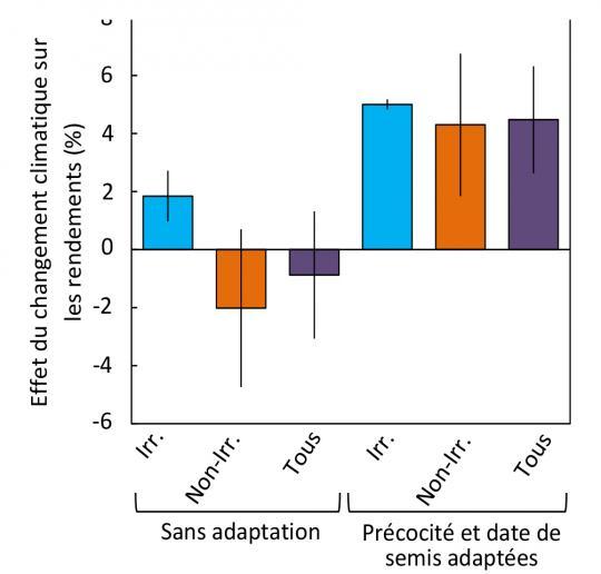 Effet du changement climatique sur le rendement de maïs en Europe