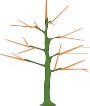 Représentation des compartiments de l'arbre
