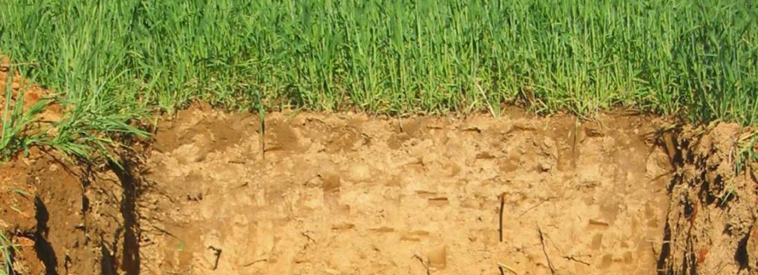 illustration Une gestion durable des sols agricoles pour séquestrer le carbone et limiter le changement climatique