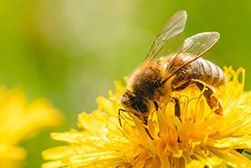 Lien vers la page de la thématique Biodiversité