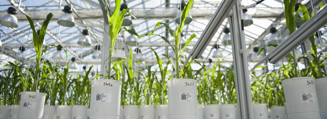 illustration Un modèle pour mieux choisir ses semences en fonction du climat