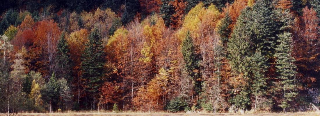 illustration Des forêts mélangées pour lutter contre les insectes ravageurs