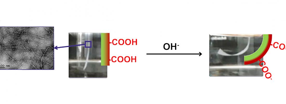 illustration Des matériaux stimulables à partir de celullose