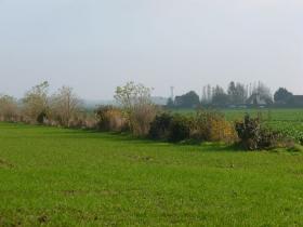 Replantation de haies d'essences mélangées en plaine céréalière. Bord du Bassin Parisien, plateau de Saint André (27).  