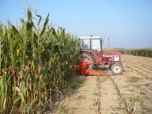 Ensilage des essais maïs Le Rheu