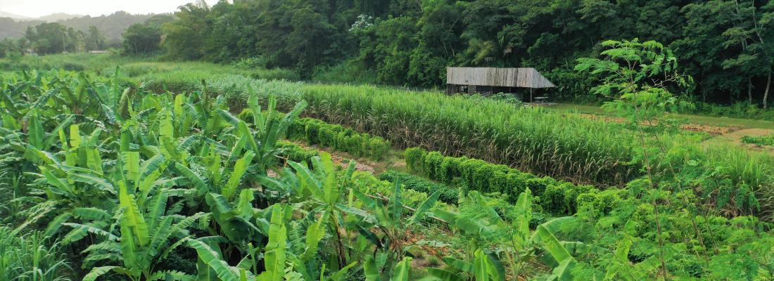 illustration Microfermes en Guadeloupe, la transition agroécologique en route