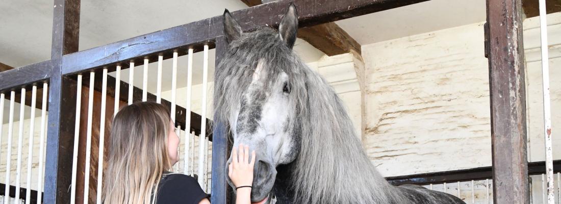 illustration Parler aux chevaux comme on parle aux jeunes enfants