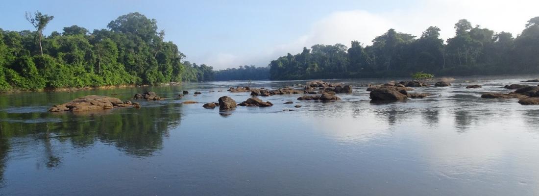 illustration Seuls 14 % des cours d'eau du globe abritent une biodiversité en poissons peu impactée par les activités humaines
