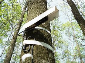 Micro-dendromètre automatique mesurant la croissance d'un chêne
