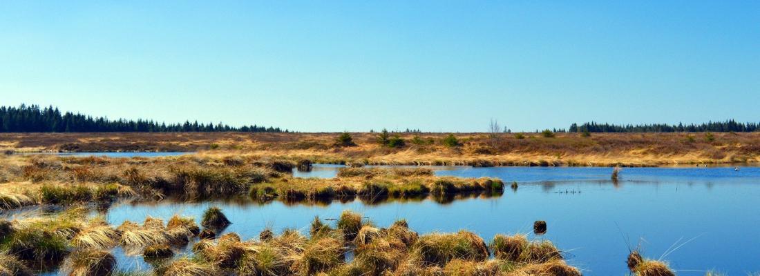 illustration Peatlands drained for agriculture: estimating carbon emissions over the last millennium