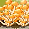 Lien vers l'infographie champignons