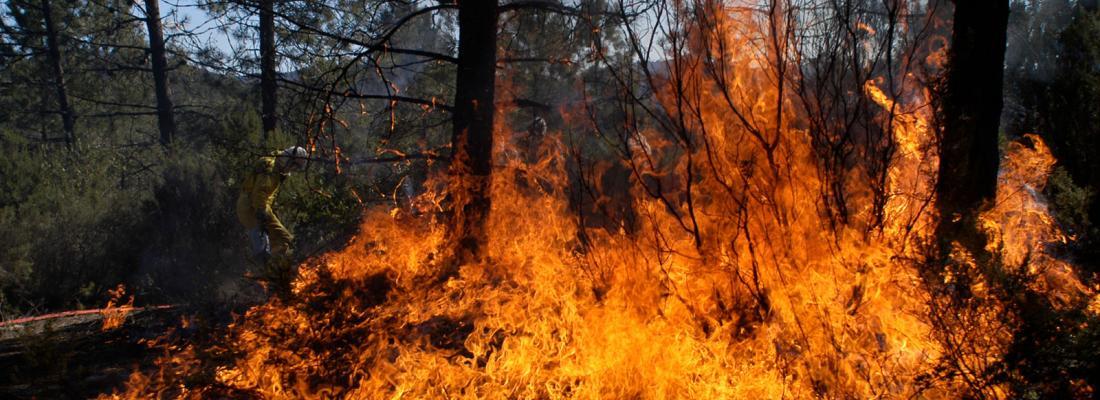 illustration Incendies de forêt