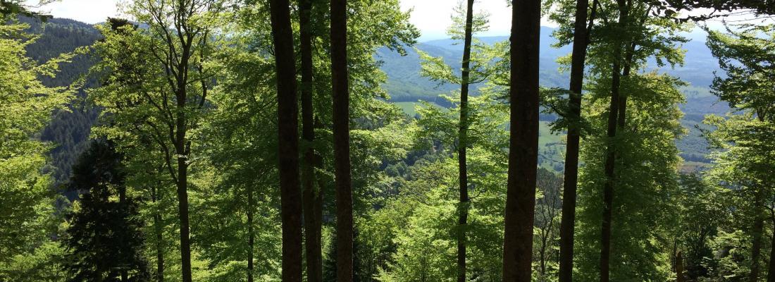 illustration  Quel rôle pour les forêts et la filière forêt-bois françaises dans l'atténuation du changement climatique ?