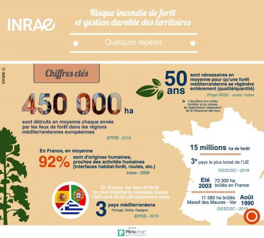 Infographie sur les incendies de forêt : chiffres clés