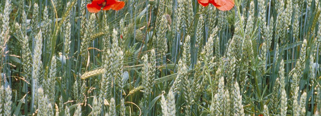illustration  Pesticides, agriculture et environnement : Réduire l'utilisation des pesticides et en limiter les impacts environnementaux.