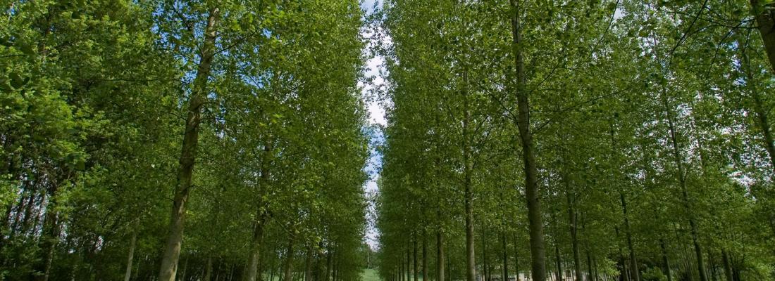 illustration L'épigénétique, un nouveau levier pour améliorer la tolérance à la sécheresse des arbres