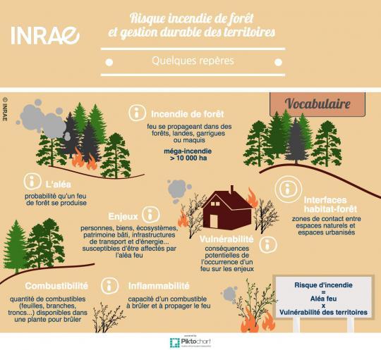 Infographie sur les incendies de forêts : quelques repères
