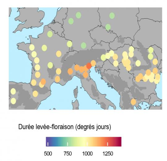 Durée optimale levée-floraison pour 59 sites européens