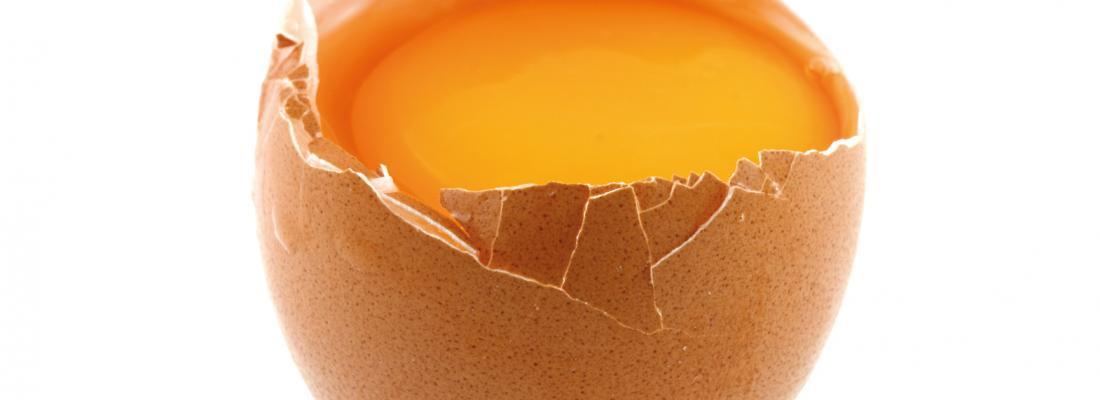 illustration Les délices de l'œuf : exquises protéines