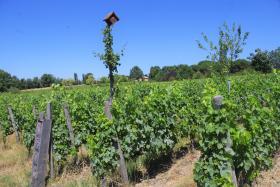 champ vigne