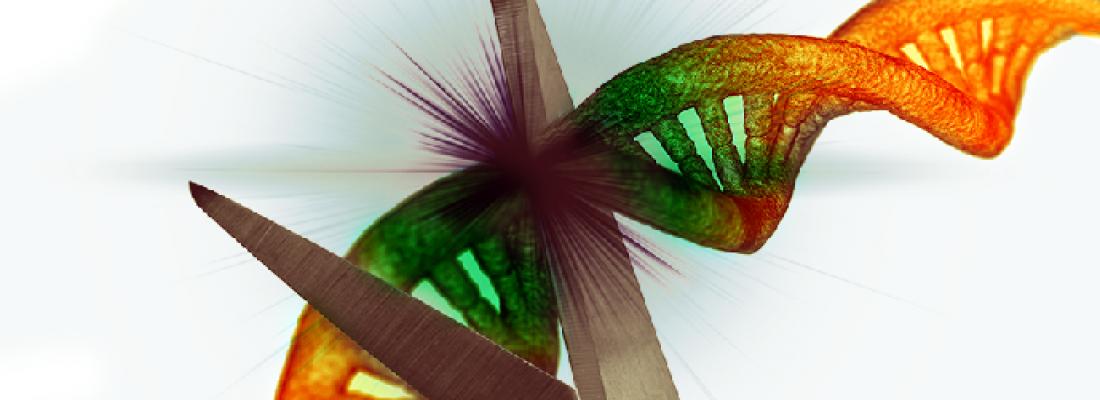 illustration Stratégie INRAE en matière d'utilisation des technologies d'édition des génomes dans le cas des animaux d'élevage