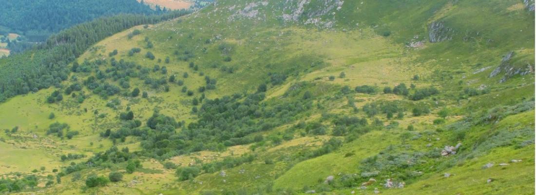 illustration Forêts secondaires : restaurer l'écosystème et contribuer au bien-être humain
