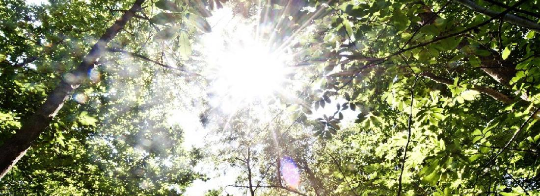 illustration Imaginer les forêts de demain