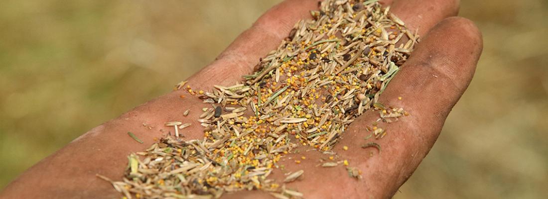 illustration Un recueil de savoirs pour produire des semences locales dans nos prairies