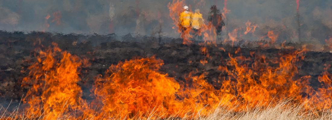 illustration  Pour passer à travers les flammes, les arbres ont leur stratégie