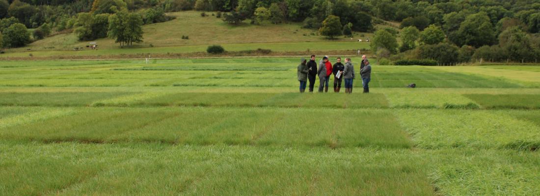 illustration Le site INRAE de Theix, un lieu d'expérimentation des plantes en conditions montagnardes