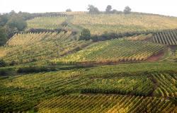 Paysage viticole à Colmar