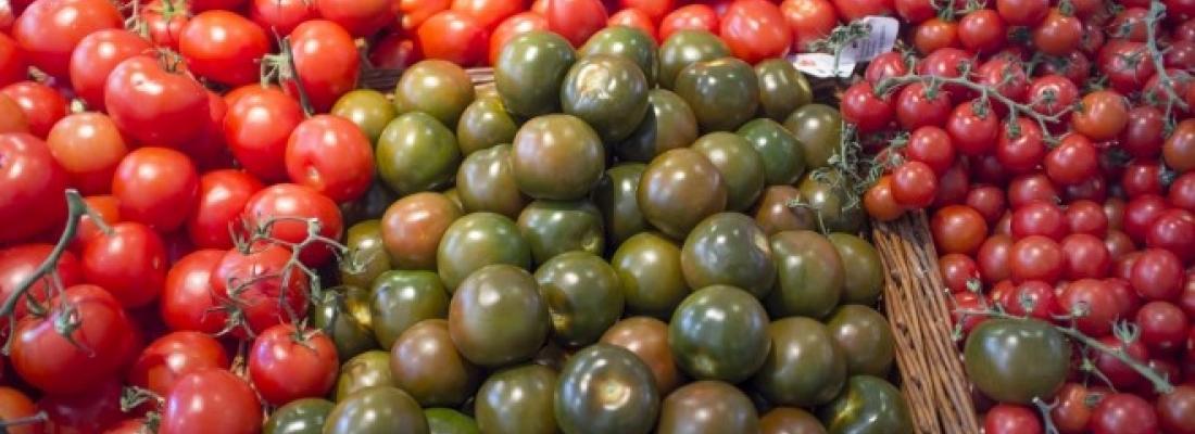 illustration Le génome d'une petite tomate sauvage livre les secrets de sa tolérance à la sécheresse