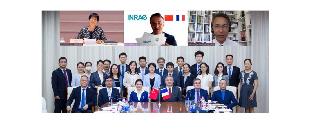 illustration INRAE and the Chinese Academy of Agricultural Sciences (CAAS) renew partnership agreement