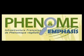 Logo Phénome-Emphasis