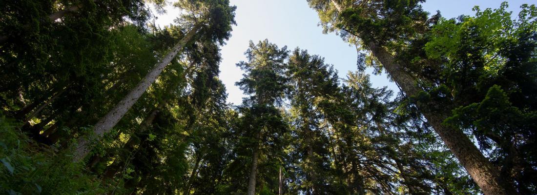 illustration Filière forêt-bois et atténuation du changement climatique :  INRAE et l'IGN publient un ouvrage de synthèse pour éclairer le débat