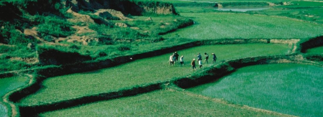 illustration Une étude de cas d'un système de culture durable : les rizières des terrasses du YuanYang en Chine