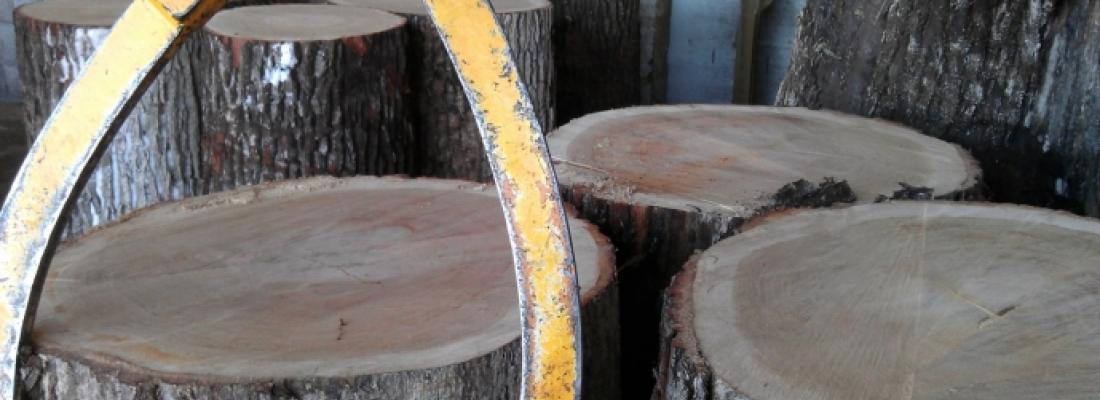 illustration Des marqueurs génétiques pour garantir la traçabilité des bois de chêne de tonnellerie